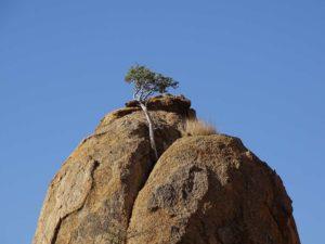 Granitblock mit Baum im Erongo Gebirge, Namibia