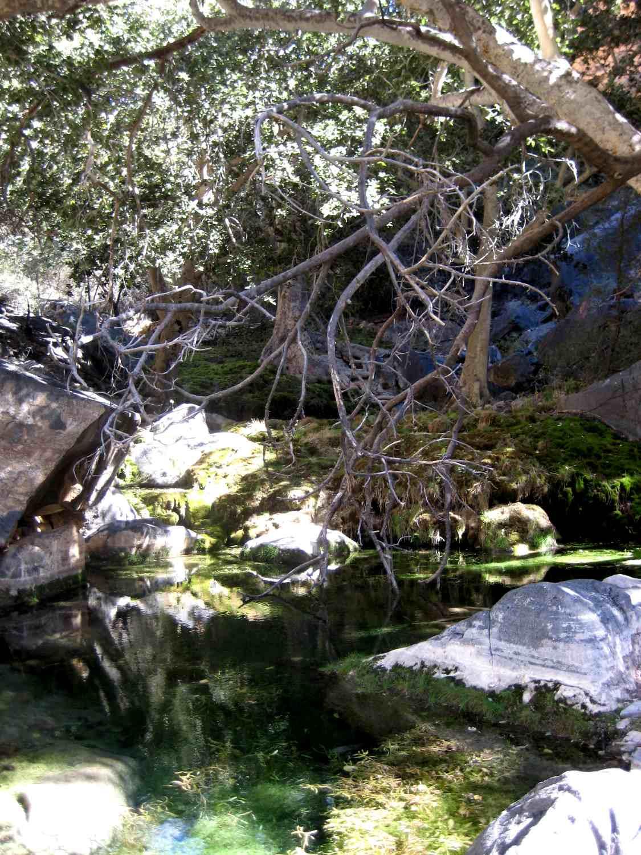 Pool und Feigenbäume auf dem Naukluft Wandertrail