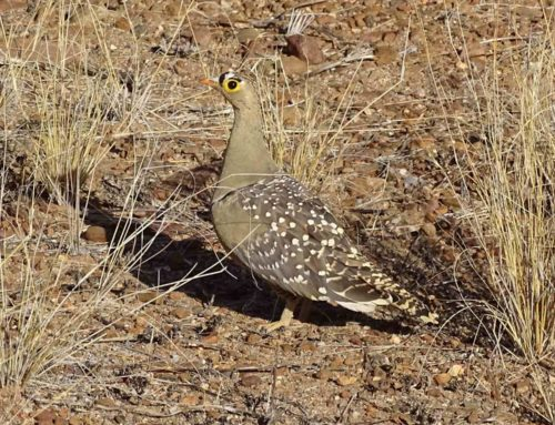 Namibia Vogelbeobachtungssafaris