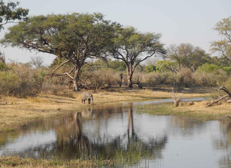 Elefant beim Trinken im Bwabwata Nationalpark