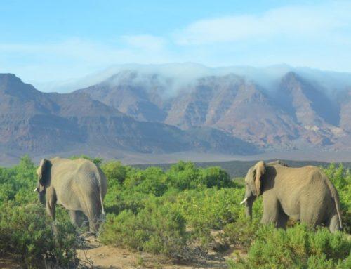 Volunteering: Nambia's Wüstenelefanten helfen