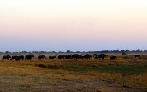 Sundowner mit Elefantenherde im Mamili Nationalpark