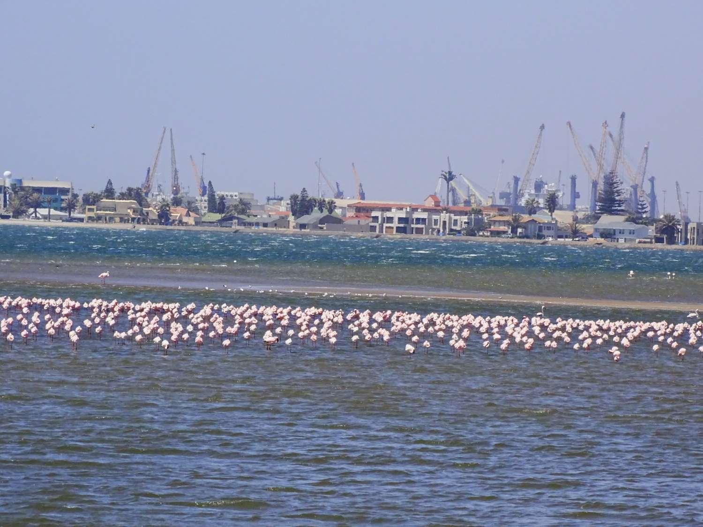 Hafenkräne und Flamingos in der Lagune von Walvis Bay