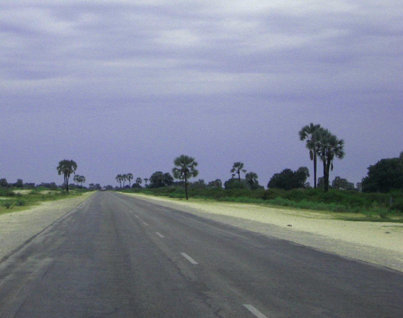 Makalanipalmen am Strassenrand im Ovamboland