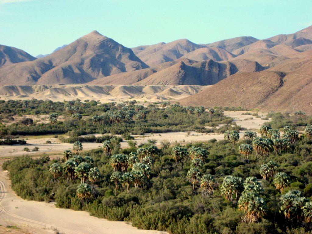 Puros - grüne lineare Oases des Hoarusib Trockenflusses im Kaokoveld in Namibia