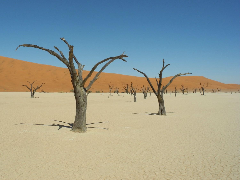 Das Dünenmeer und Blick aufs Dead Vlei von Big Daddy