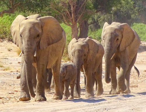 Namibia: Trekking für Wüstenelefanten