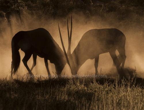 Wildtier-Fotokurs in Namibia – 2 Tage