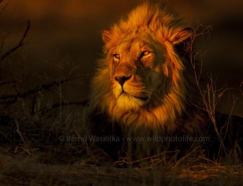 Foto-Safari Kalahari: Kgalagadi Transfrontier Park