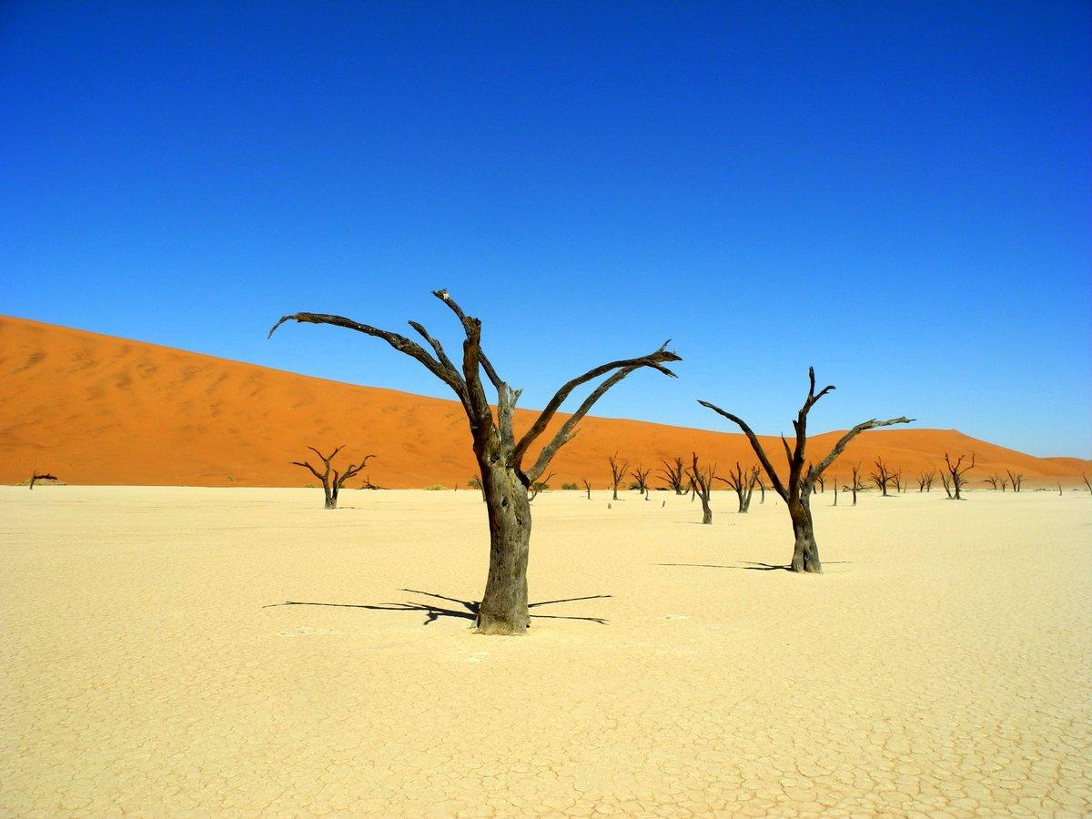 Tote Bäume im Dead Vlei