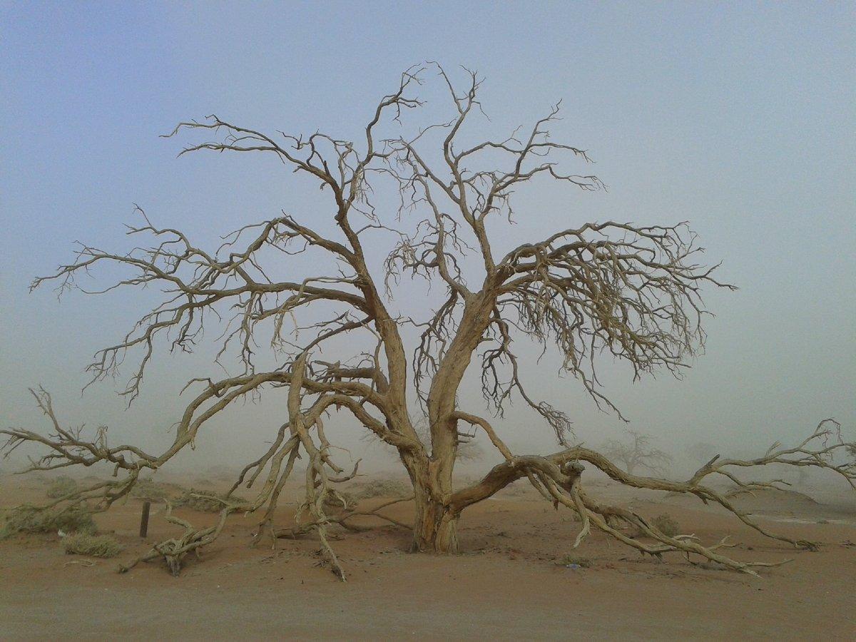 Toter Baum am Sossusvlei