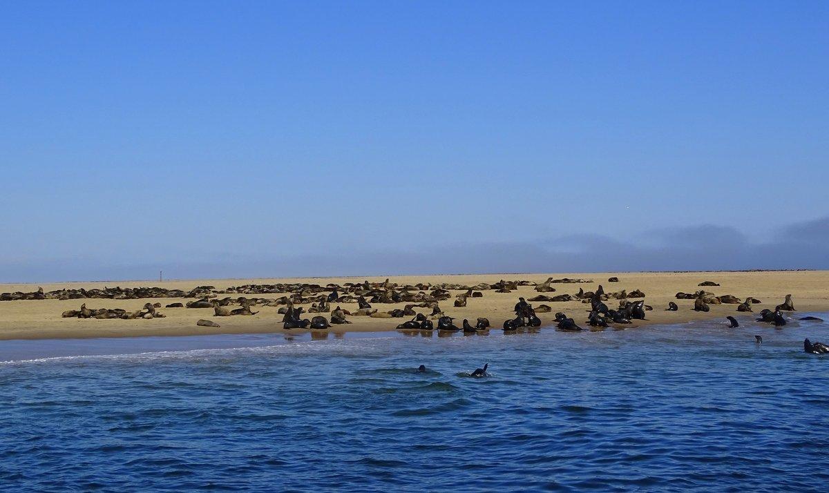 Robbenkolonie in der Walfisch Bucht/ Walvis Bay