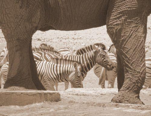 Klassische Namibia Rundreise
