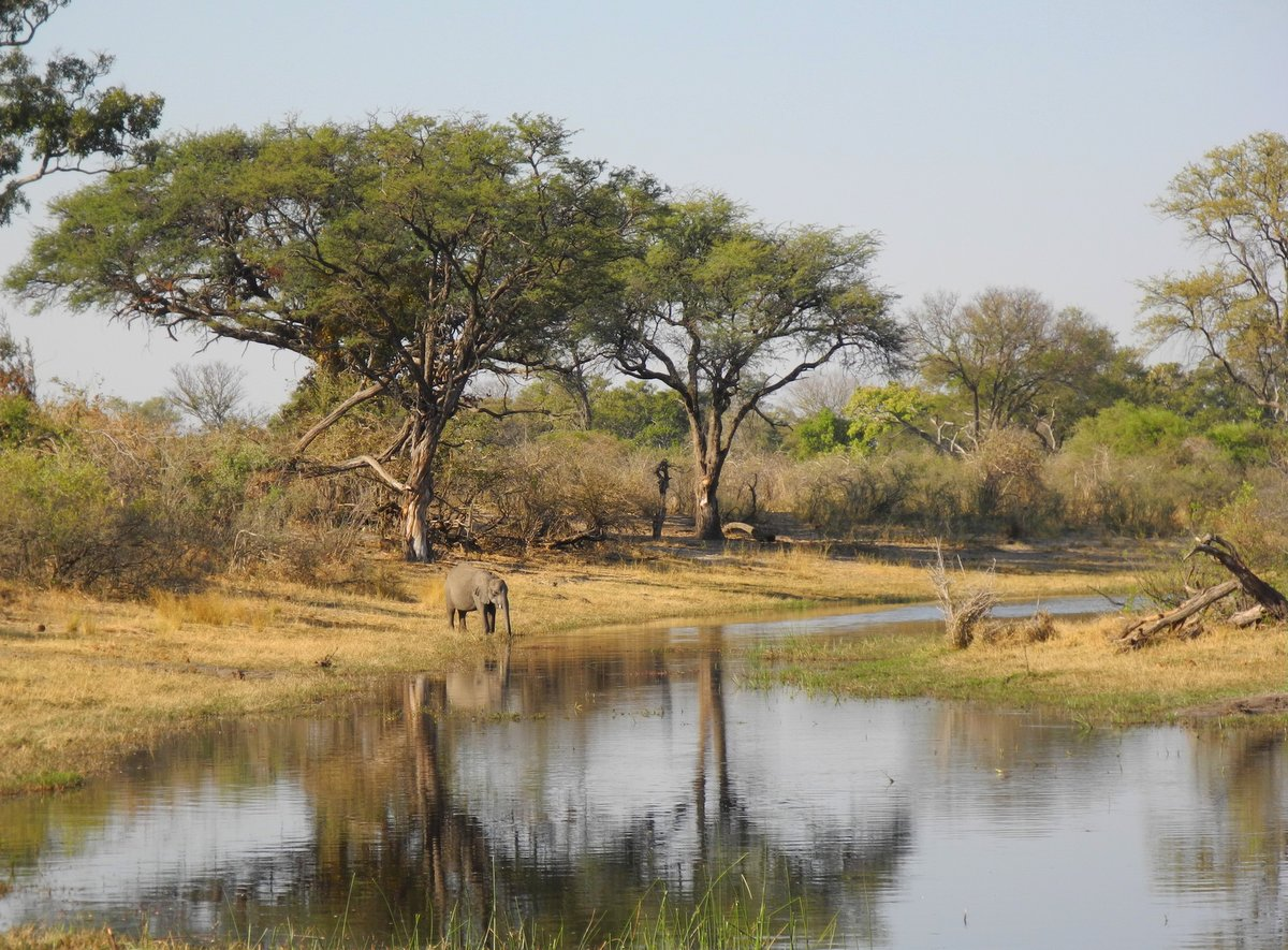 Namibia's Nord-Osten: Elefant trinkt am Kwando Fluss in Namibia