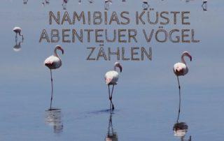 Namibias Küste Abenteuer Vögel zählen