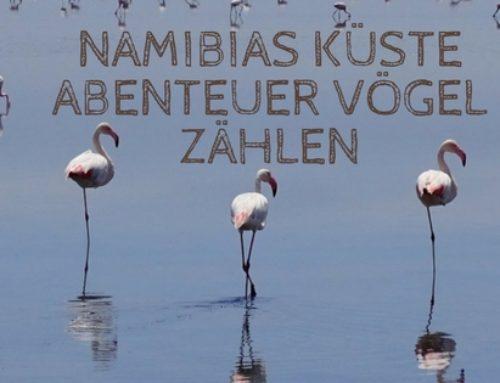 Namibia's Küste mal anders – Abenteuer Vögel zählen