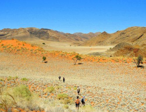 Wandern in Namibia – Genusswandern in der Namib Wüste