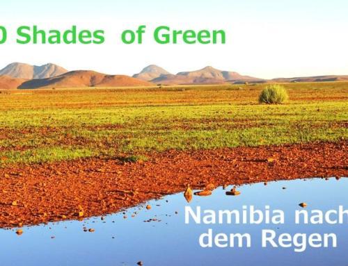 Fifty Shades of Green – Namibia nach dem Regen