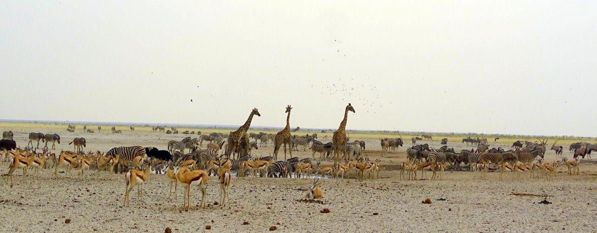 Etosha Wasserloch während der Trockenzeit