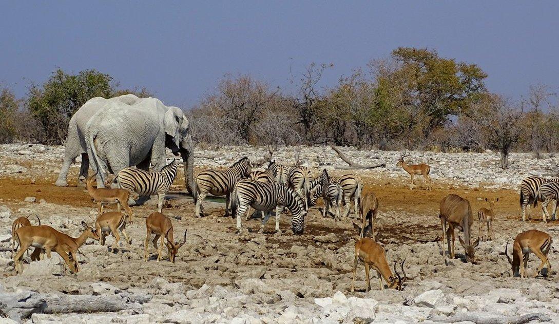 Etosha Wasserloch_Elefanten Impalas Zebras