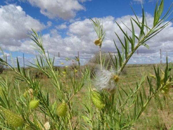 Pflanzen in Namibia nach dem Regen