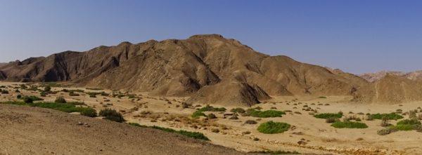 Wüstenelefanten im Flussbett des Hoanib