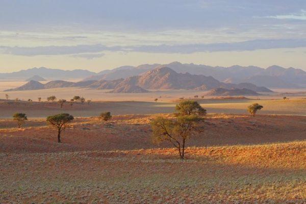 Dünenlandschaft mit Bergen in der Namib