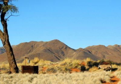 Oryx im Camp