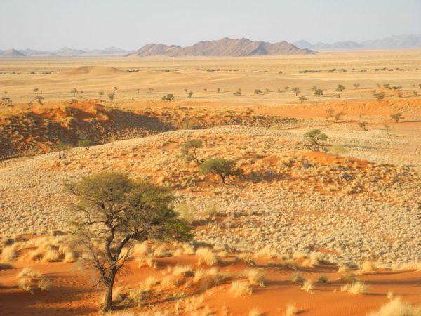 Bewachsene Dünen am Rande des NamibNaukluft Parks