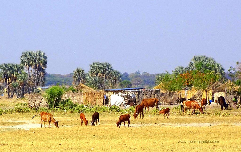 Szene aus dem ländlichen Namibia