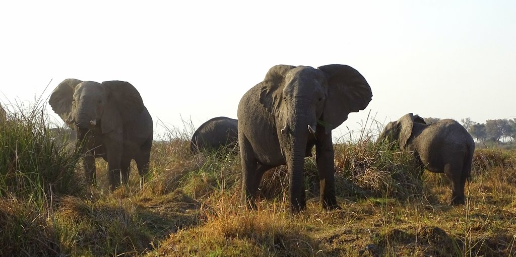 Elefanten in der Zambezi Region in Namibia