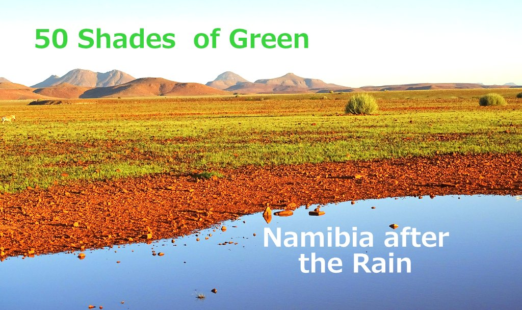 Namibia after the Rain