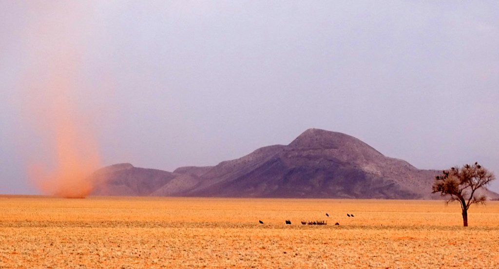 Sand swirl and vultures in the pre-Namib, Namibia