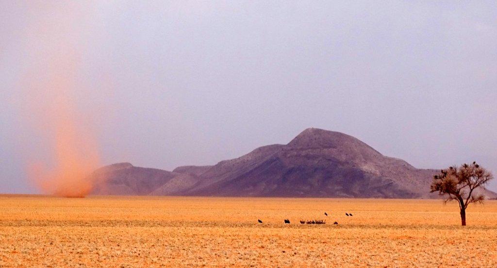Sandwirbel und Geier am Rande der Namib, Namibia